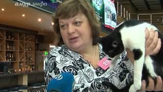В Благовещенске проходит выставка кошек ...