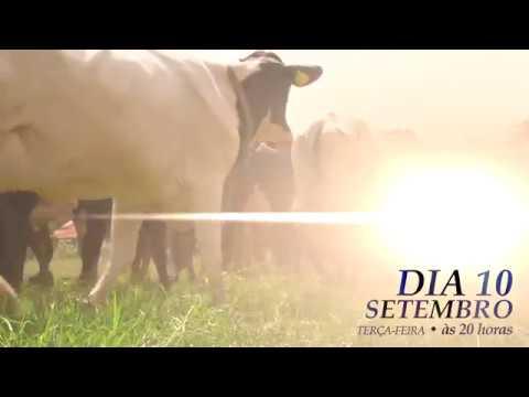 5º LEILÃO MATRIZES TOP LEITE BELA VISTA - DIA 10 DE SETEMBRO - REMATEWEB.COM
