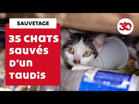 35 chats sauvés d'un appartement insalubre