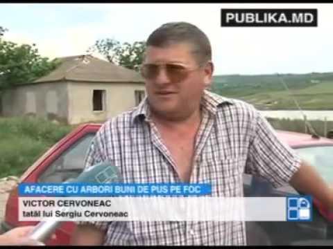 Un tânăr din Sângerei şi a deschis propria afacere cu copaci Paulownia