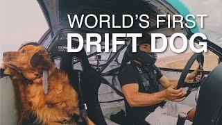 Jett the Drift Dog Goes Drifting