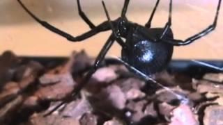 Первая помощь при укусах насекомых и змей