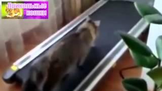 Смешные кошки #2   подборка 2013