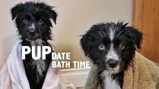 PUPdate : Bath Time thumbnail