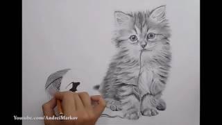 Рисунок кота карандашом ка нарисовать котика