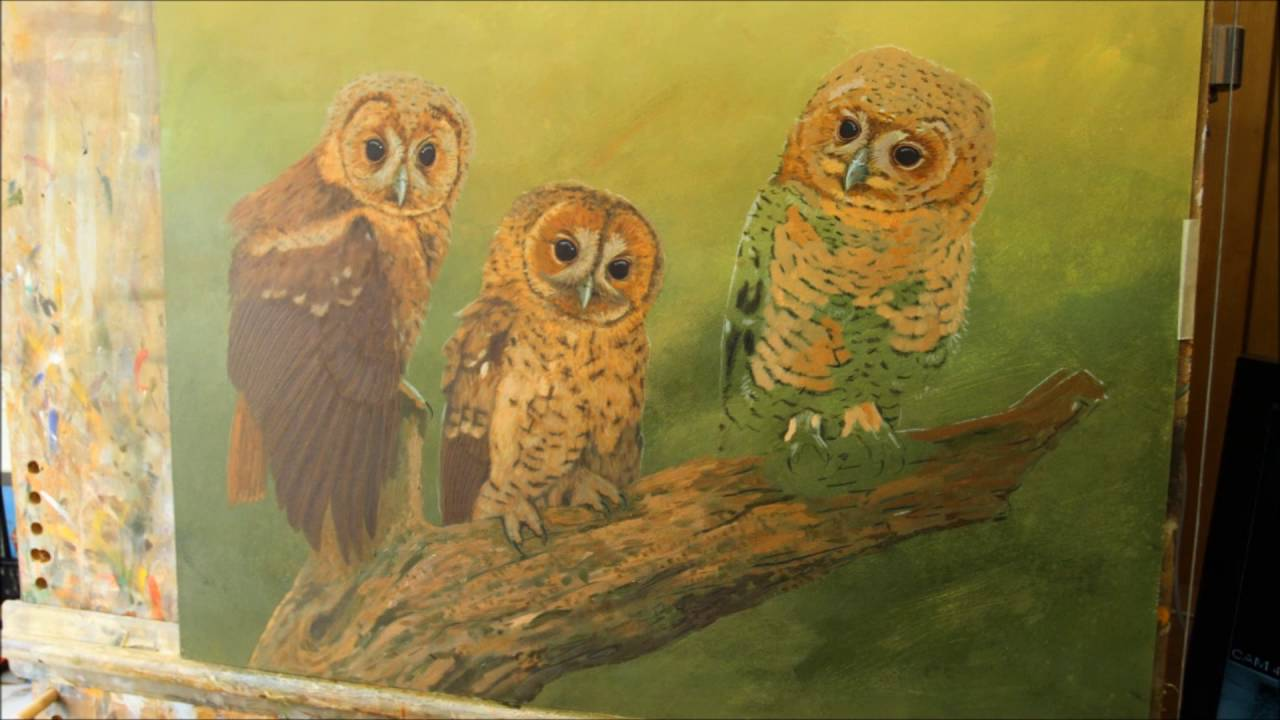 Robert E Fuller How I Produce A Painting Of A Tawny Owl Youtube
