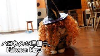 ハロウィンの準備をするねこ。-Maru prepares for the Halloween.-