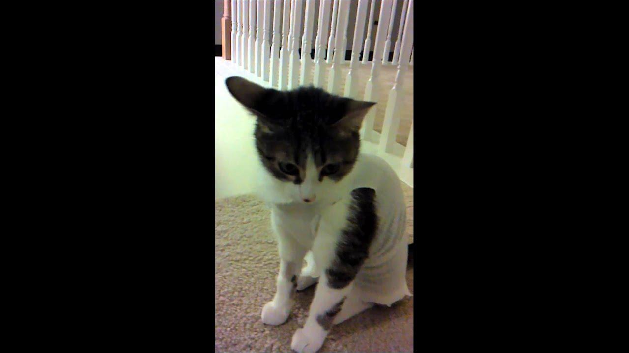 Vestido para gatita esterilizada youtube for Para desarrollar un parque ajardinado