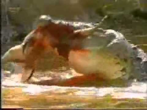 phanmemmoi.net-Cá sấu ăn thịt.flv