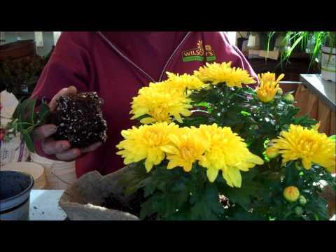 Wilson's Garden Center: How To Make A Tire Planter