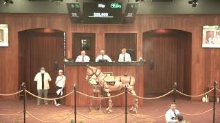 OBS March 2021 Two-Year Olds-in-Training Sale, Day 1