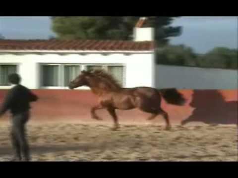 2006 Chestnut (Alazan) PRE Stallion for sale WWW.PRE-IMPORTS.COM