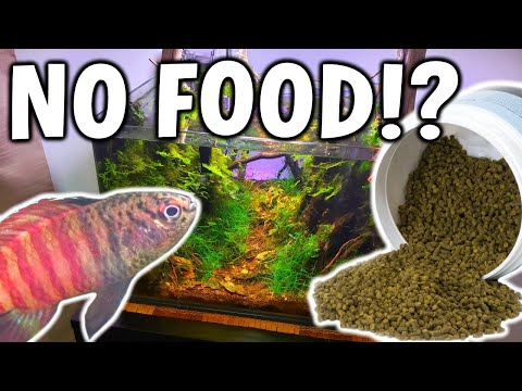 6 MONTHS With NO FISH FOOD In Aquarium - HOW Is It Possible!?