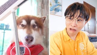 The dogs are cute and funny #36  Dog funny video Compilation