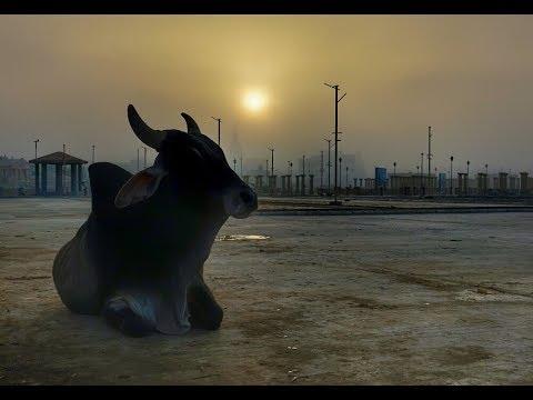 Amazing Colours of Gujarat, India - Travel Snapshots 4K. (ULTRA HD)