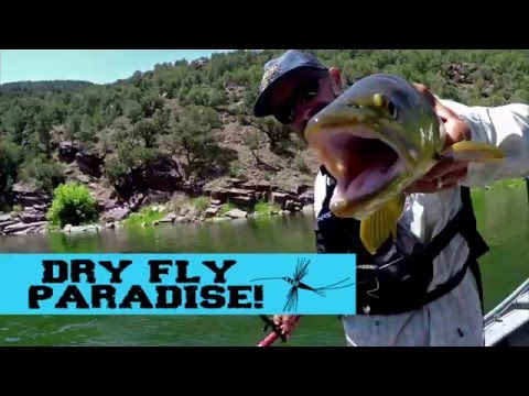 Dry Fly Paradise - Utah's Green River !