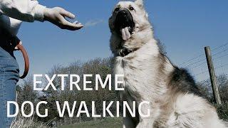 EXTREME Dog Walking (CUTE PUPPY)