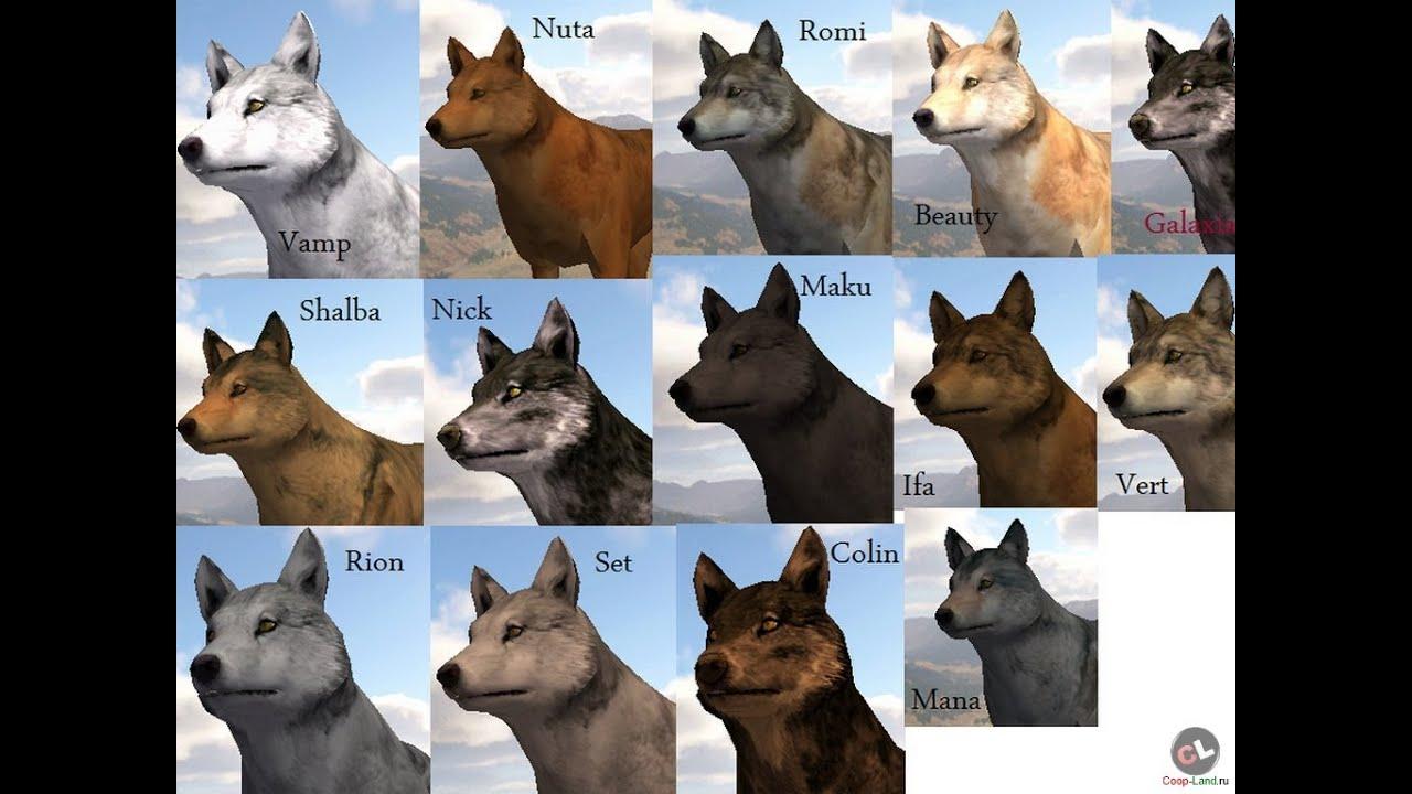 Wolfquest симулятор жизни волка скачать