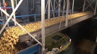 Sorting potatoes on starch content with salt bath
