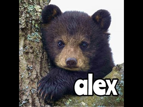Alex The Black Bear Is Lonely - Children's Bedtime Story/Meditation