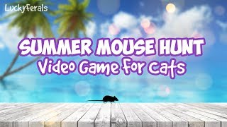 Summer Mouse Hunt Video Game For Cats Only Cat Games On Screen For Cats To Play