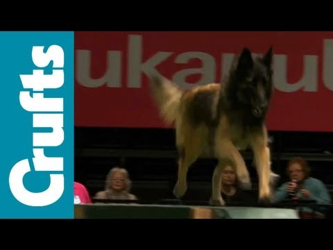 Agility - Large - Finals - Crufts 2012