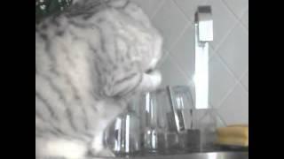 Толстый кот и волшебная вода