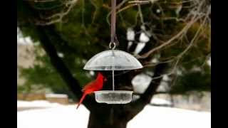 Feeder In January