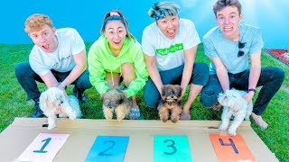 FASTEST PUPPY WINS $10,000 DOLLARS!!