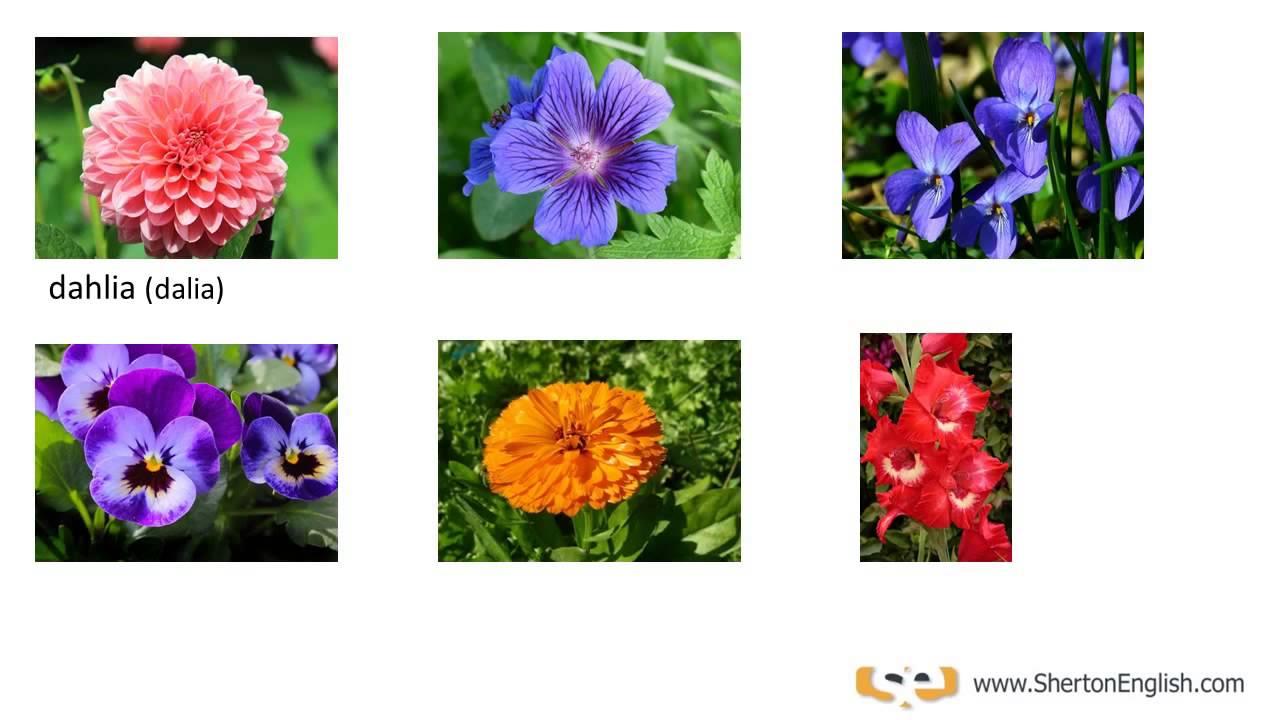 Sherton english nombres de las flores names of flowers for Plantas decorativas con sus nombres