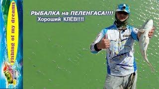Риболовля на пеленгаса!!!Хороший клювання!!!Кирилівка 26.04.2019!!!
