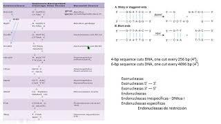 DNA recombinant DNA restriction endonucleases enzimas de restricción biología molecular biology