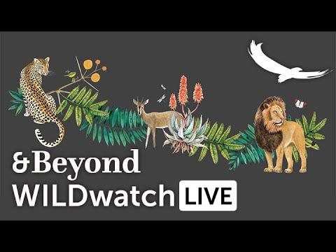 WILDwatch Live | 13 April, 2021 | Morning Safari | South Africa