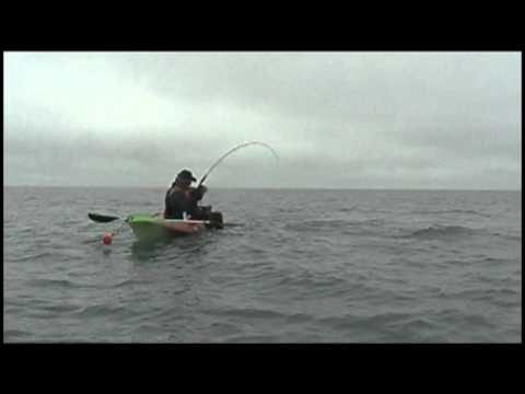MONSTRUO MARINO EN MAR CHIQUITA - elephant fish, monster of the deep