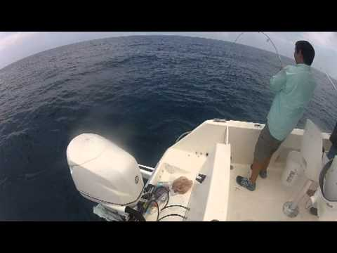 Offshore Fishing Action..African Pompano, Cobia and BIG Mangrove Snapper