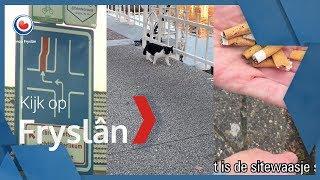 KIJK OP FRYSLÂN: Gevaarlijke kruising Sint Annaparochie, touwen voor katten en Fransman raapt peuken