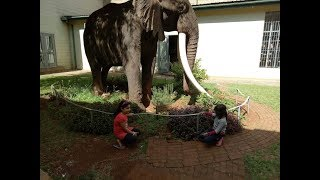 Nairobi National Museum - A Walk though History
