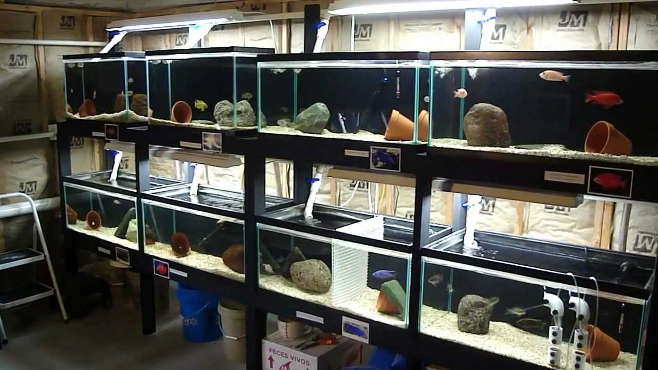 My Fish Room Update 26 Tank Total Youtube