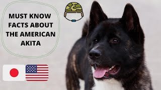 Getting To Know Your Dog's Breed: American Akita Edition