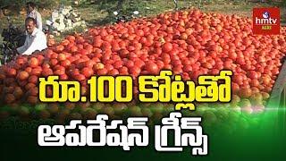 టమాటా రైతులకు చేయూత కోసం ఆపరేషన్ గ్రీన్స్ | Operation Greens Scheme For Tomato Farmer | hmtv Agri