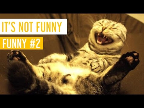 Funny Cat Videos #2 - It's Not Fun - Meow Paw
