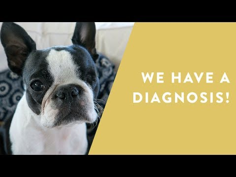 Our Boston Terrier's Health Saga | VLOG | Prepping For A SALE And Wedding Planning Struggles
