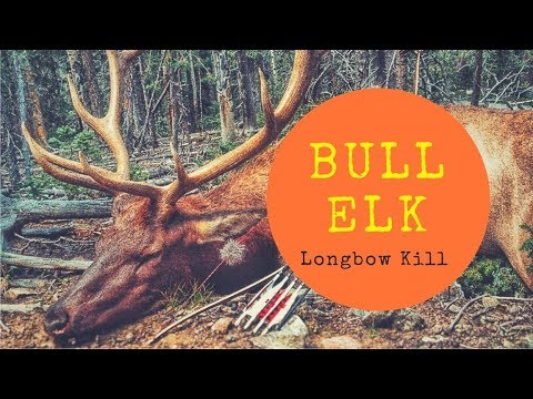 Elk Hunting With A Longbow!!