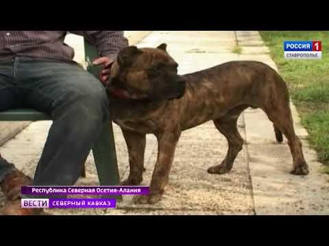 Во Владикавказе разводят собак-воинов