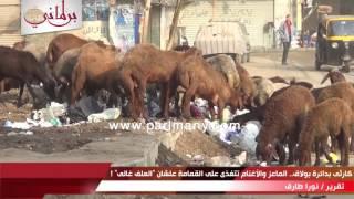 فيديو كارثى بدائرة بولاق.. الماعز والأغنام تتغذى على القمامة علشان