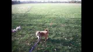 Dogs Trust Kenilworth: Digby