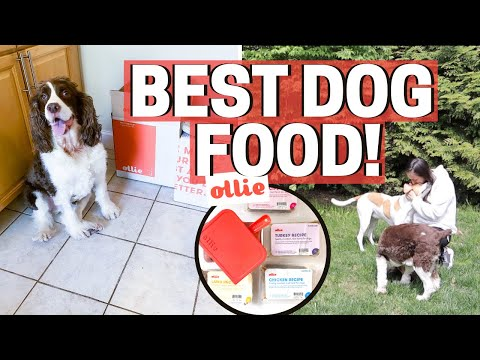BEST HEALTHY DOG FOOD - OLLIE PET FOOD REVIEW!