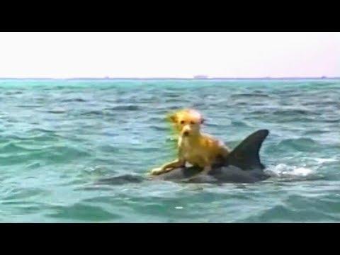 Zeus And Roxanne Movie Trailer Tv Spot 1997 Steve Guttenberg Kathleen Quinlan