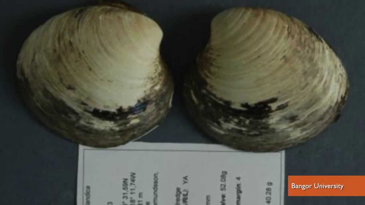 World's Oldest Animal, 507-Year-Old Clam, Discovered And Killed