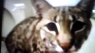 Коты  пирдуны